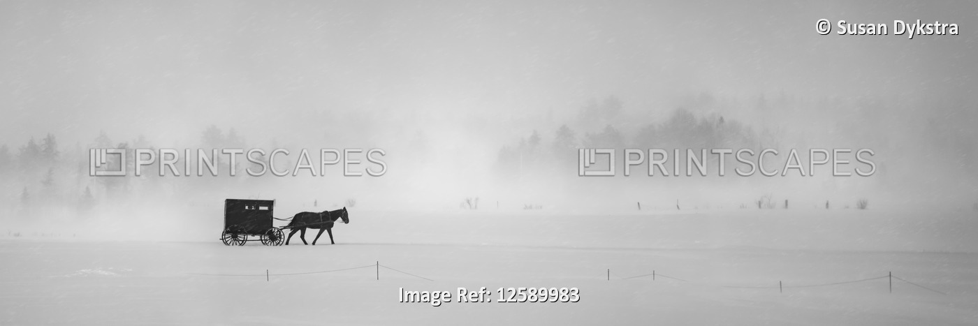 Horse and buggy in snowstorm