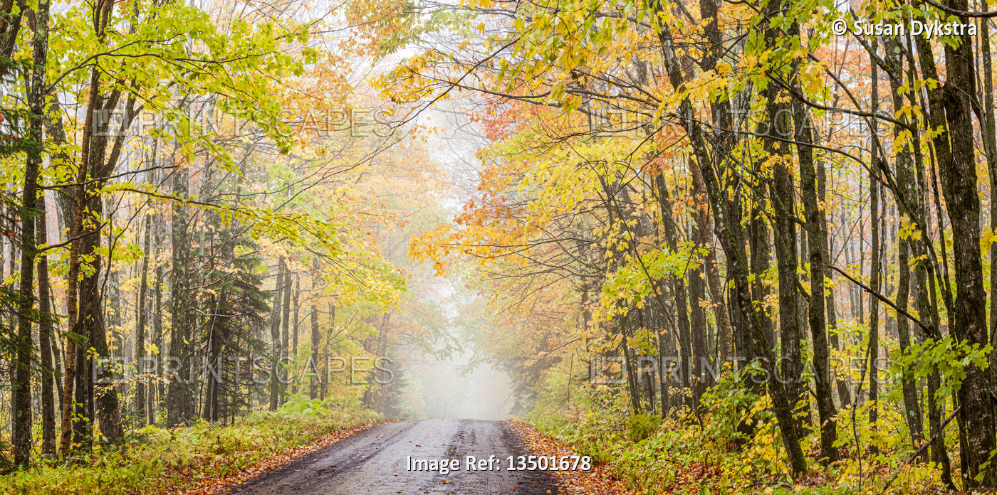 Mist in the Autumn Forest with road
